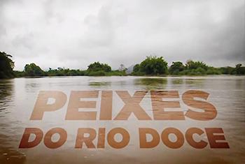 Série do Jornal Minas aborda impacto do rompimento da barragem do Fundão na ictiofauna do Rio Doce